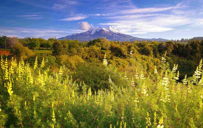 reserva nacional llanquihue.png